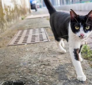 Лишай у кошек: информация, признаки, лечение