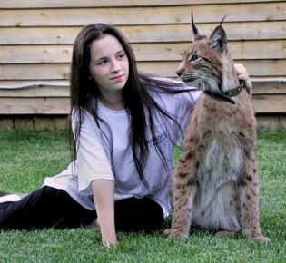 Кошка, похожая на рысь: выбор и описание породы