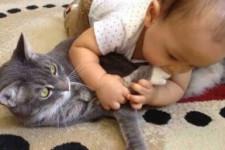 Чем можно заразиться от кошки: что делать, если заболели