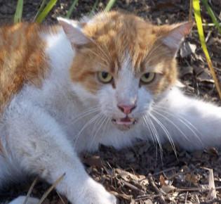 Болезни кошек: симптомы, таблицы, лечение