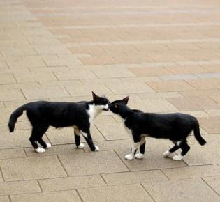 Течка у кошек: как успокоить, когда начинается, сколько длится