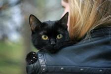 Черная кошка в доме: приметы, ритуалы, интересные факты