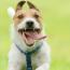 5 причин горячих ушей у собаки: какой температуры должны быть уши у собаки и щенка