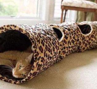Тоннель для кошки: как выбрать и сделать своими руками