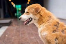 У собаки выпадает шерсть - причины, что делать?