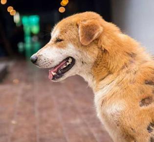 У собаки выпадает шерсть — причины, что делать?