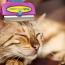 Фурминатор для кошек: что это такое, как подобрать и использовать