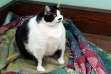 Чем кормить стерилизованную кошку: полезные и нежелательные продукты