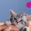 Whiskas для котят: кормление, разбор состава, отзывы