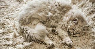 Милые домашние животные — мастера маскировки!
