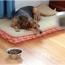 Бронхит у собак: симптомы, вирусный и хронический, лечение