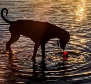 Почечная недостаточность у собак — верная диета и симптоматика, лечение