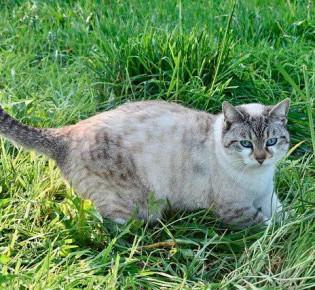 Тремор головы у кошки: что такое, диагностика, лечение